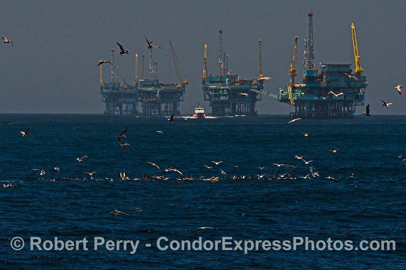 "Offshore service vessel ""Alan T"" heads back to the harbor after servicing Platforms C, B, A and Hillhouse.  Diving birds and dolphins indicate an ocean hot spot in the foreground."