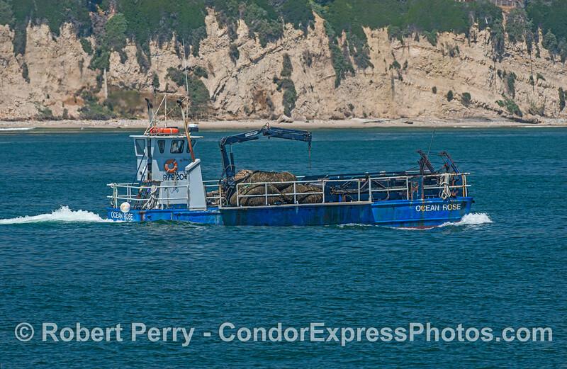 vessel kelp cutter Ocean Rose 2017 05-02 SB Coast-e-009