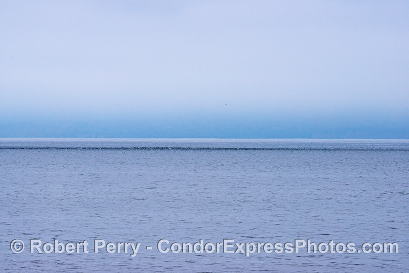 A minimalist view of a long-beaked common dolphins line on a gray morning.
