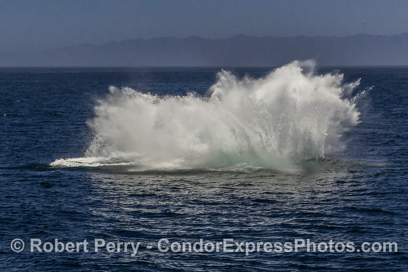 8- A series of 8 images in a row showing a breaching humpback whale sequence. (the end)