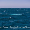 The blue streak.  Bright blue shines from beneath the waves as a giant blue whale swims by.