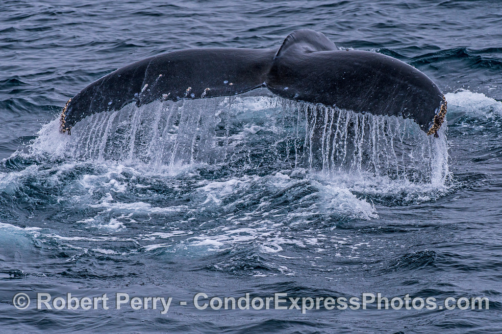 Waterfall - humpback