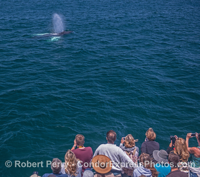 Whale fans get a close look at a humpback whale.