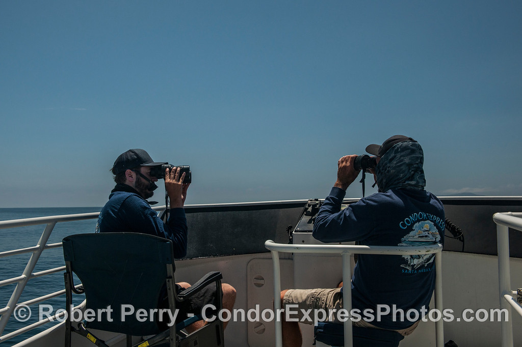 Condor Express crew searching for whales.