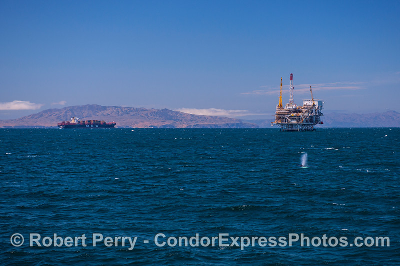 A typical active day in the Santa Barbara Channel - container ship, oil platform and whale.