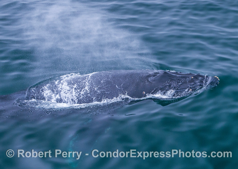 Looking down on a very friendly humpback whale.