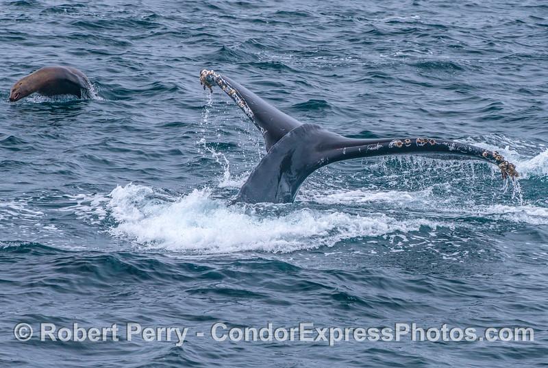 Sea lion and humpback whale