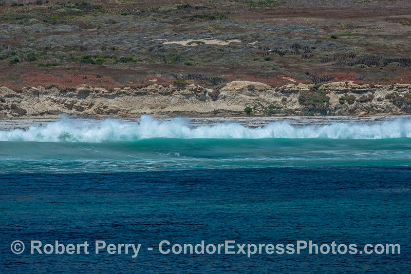 San Miguel Island - southeast - waves wash across rookery