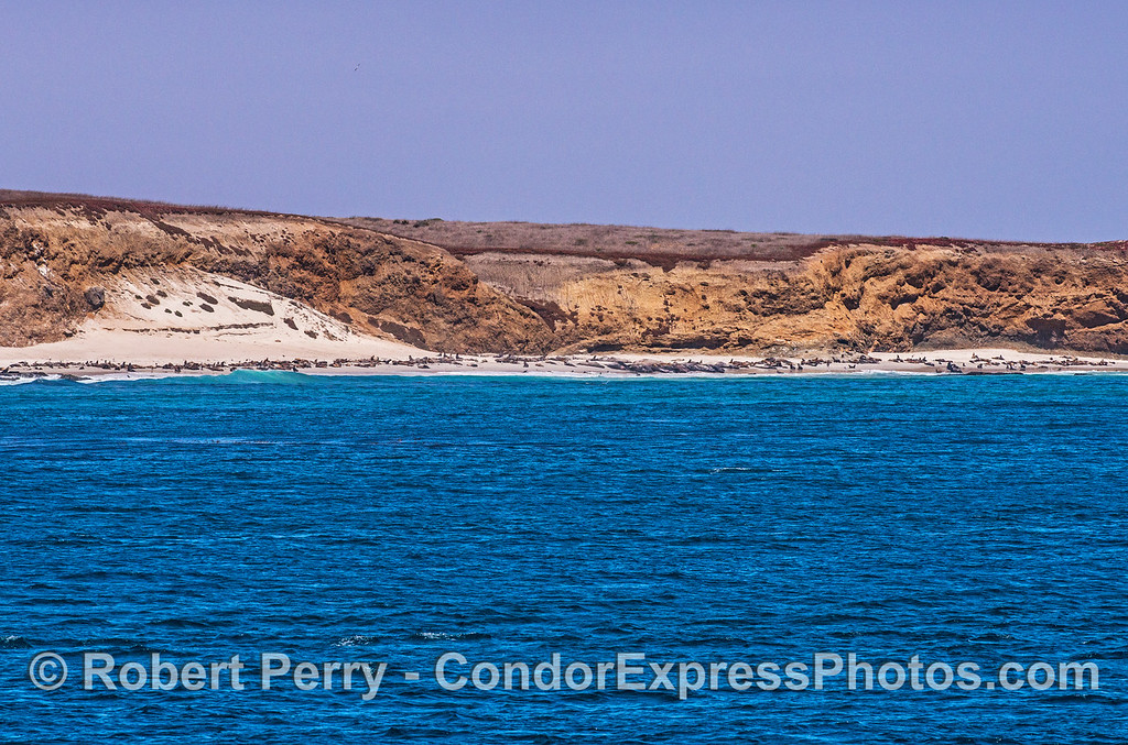 Wide beach - San Miguel Island - southeast - sea lions and elephant seals