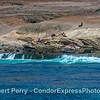 San Miguel Island - southeast - California sea lion rookery