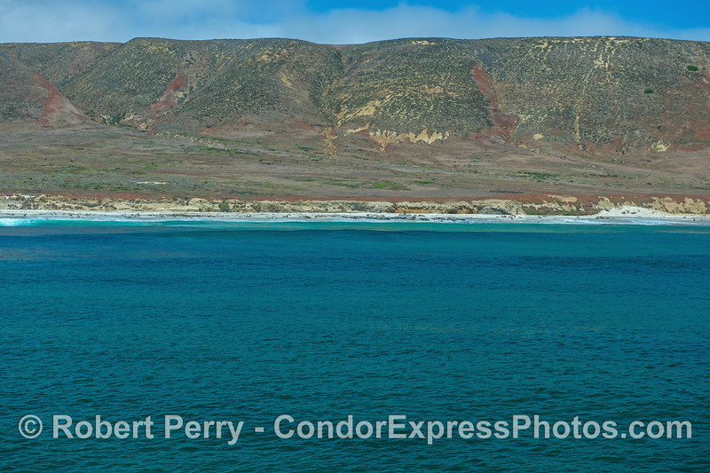 Panorama - San Miguel Island - southeast - pinnipeds across wide beach