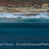 San Miguel Island - southeast - waves wash across rookery