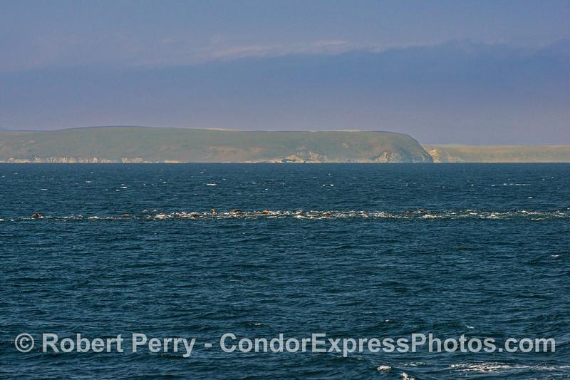 California sea lion mob - Santa Cruz Island (left) and Santa Rosa Island (right) in background.