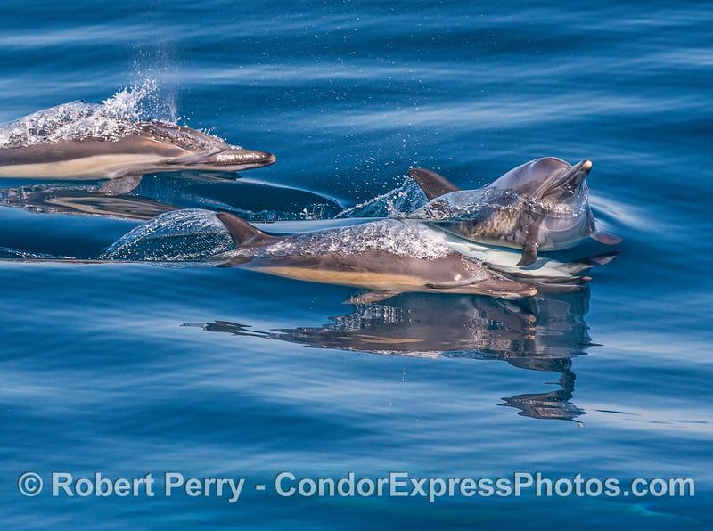 Dolphin tomfoolery