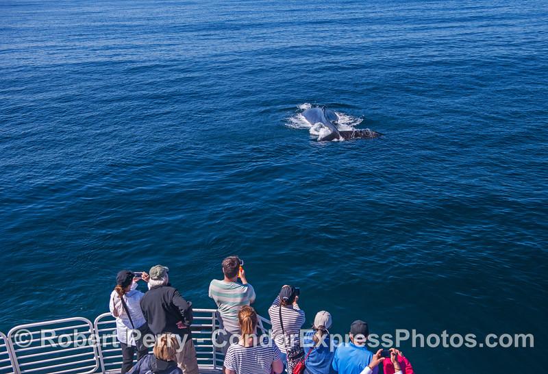 A friendly humpback whale