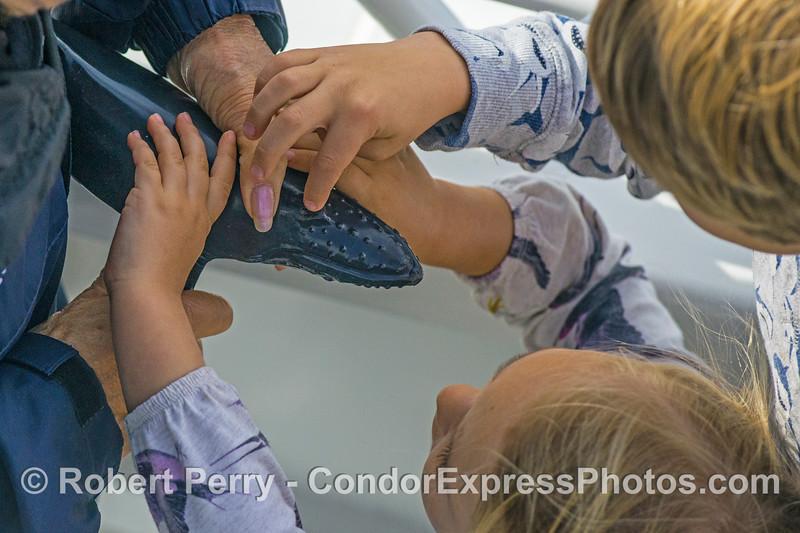 Kids get hands on a humpback.