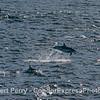 Flyin' dolphin.