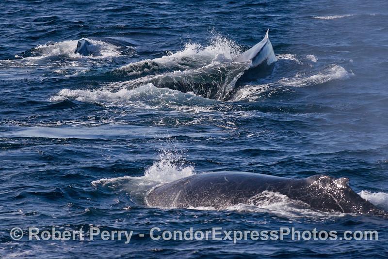Los tres ballenas.