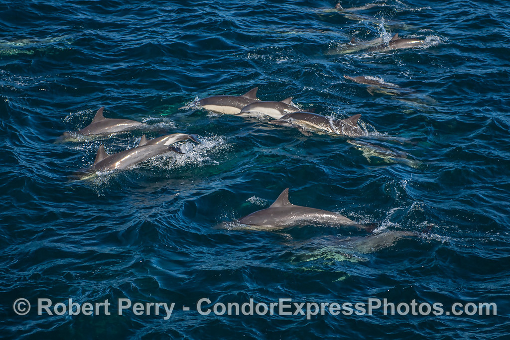 Dolphin cluster.