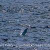 Dolphin takin' off.