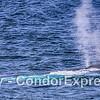 A lllllooooooooonnnnnnnnngggg beast - about half of a giant blue whale fits into this panorama.