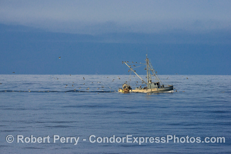 "Bottom trawler ""New Hazard"" feeding plenty of scavenging sea birds with its by-catch"