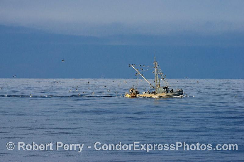"""Bottom trawler """"New Hazard"""" feeding plenty of scavenging sea birds with its by-catch"""