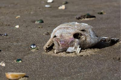 Piha Beach, NZ