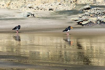 Piha beach, NZ.