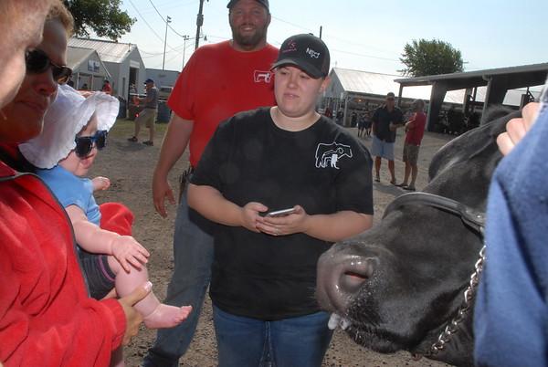 2017 Benton County Fair 4-H Beef Show