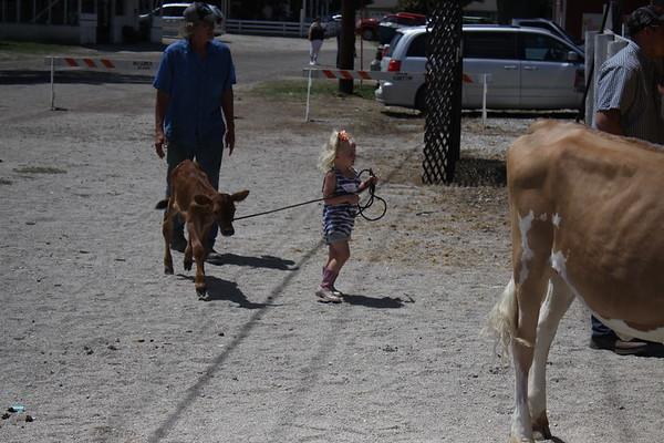 2017 Benton County Fair Kiddie Cattle Capers