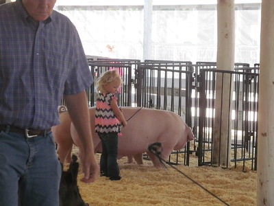 2017 Benton County Open Swine Show