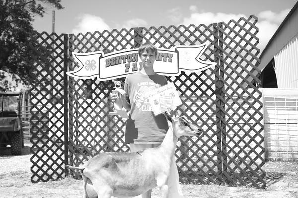 2017 Bernton County Fair Dairy Goat Show