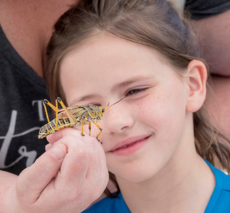 "Admiring a grasshopper  at the ""Wingding"" family event"