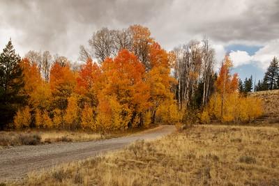 DA054,DP,Fall in the Sawtooth Mts