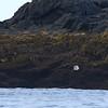 Harbor Seal?