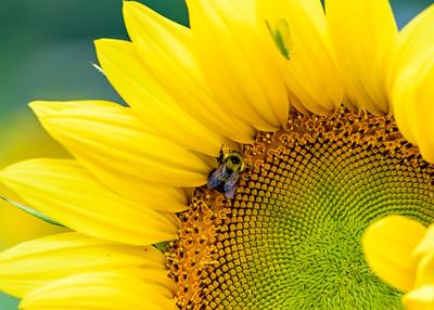 DA094,DN,Pollination Station