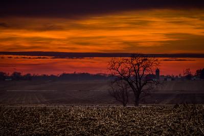 DA094,DP, Field Tree Sunset
