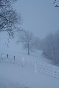 DA016,DP,Tree in the mist