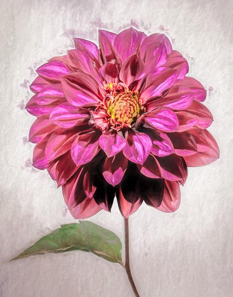 08-12-17 Purple Dahlia