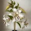 08-14-17 White Lilies