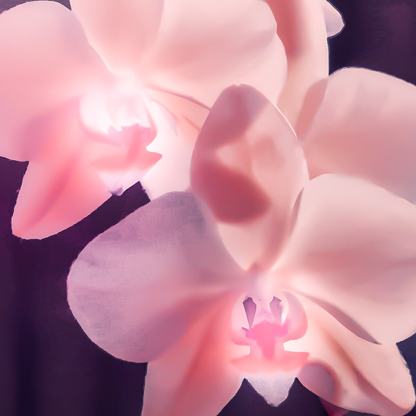 Pink Orchid ala OKeefe