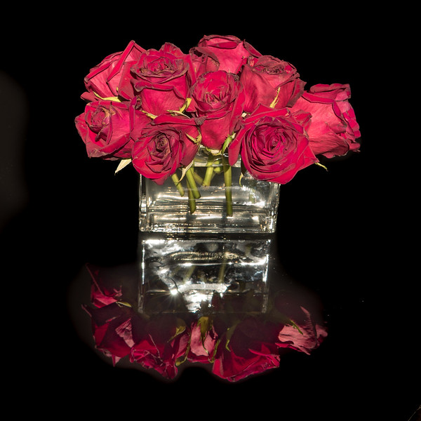 Red Roses Reflected