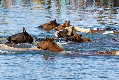 Pony Swim 2017