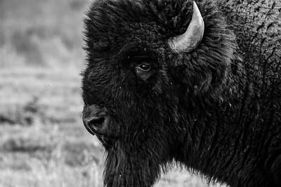 DA094,DB,Buffalo Profile