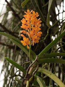 Orchideje a motýli v arboretu III