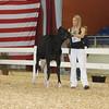 AllAmerican17_Holstein_IMG_2370