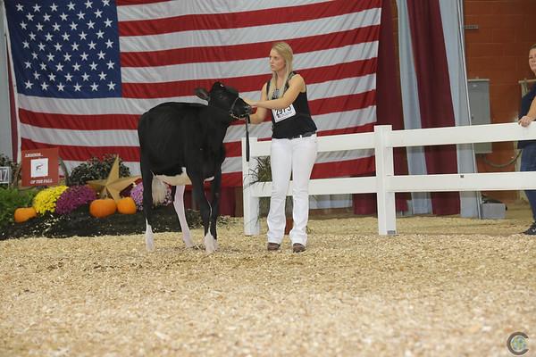 AllAmerican17_Holstein_IMG_2363