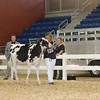 AllAmerican17_Holstein_IMG_2374