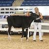 AllAmerican17_Holstein_IMG_2372